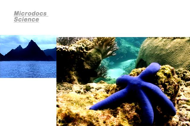 Microdocs-Coral